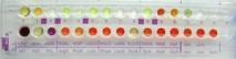 Rapid ID 32 A - Набор для идентификации анаэробов за 4 часа