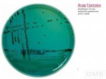 Hektoen agar - Агар для селективного выделения Salmonella и Shigella