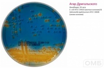 Drigalski agar  -  Дригальского агар