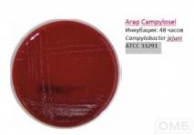 Campylosel Agar - Агар для селективного выделения бактерий рода Campylobacter