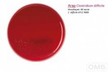 Clostridium difficile agar -  Агар для селективного выделения Clostrium difficile