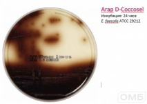 D-Coccosel agar - Желчно-эскулиновый агар
